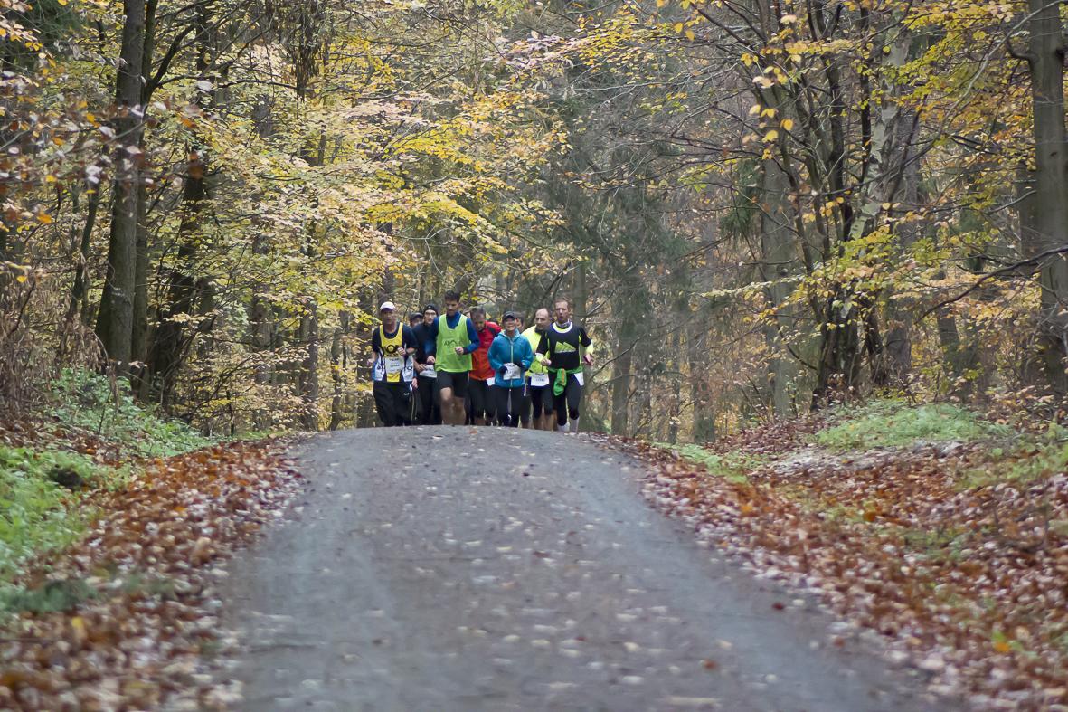 ARQUE-Läufer im Wald ©Harald Lipp