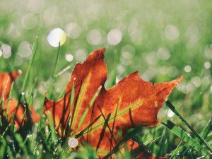 Herbstblatt im Gras, CCO